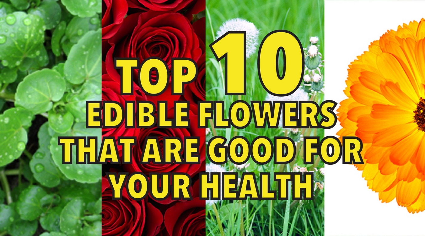 Top 10 edible flowers that are good for your health