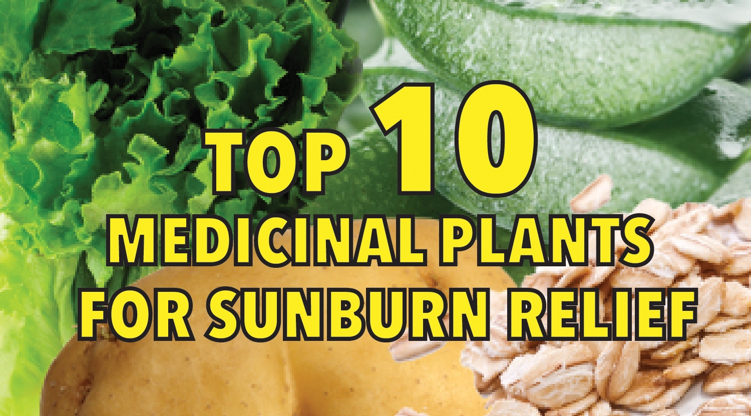 Top 10 medicinal plants for sunburn relief